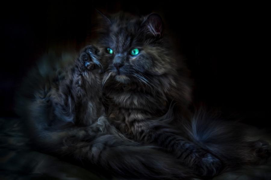 32张黑猫的惊艳个性,似魔神附体